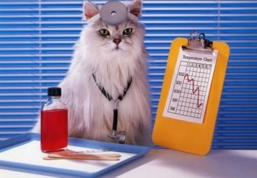 educated cat - photo #29