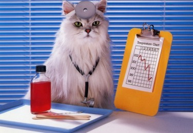 Image result for medical cat
